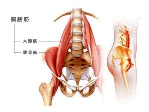 大腰筋の説明